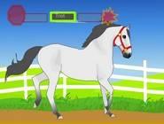 Horse care 11697