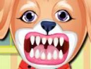 Chien Soins des Dents