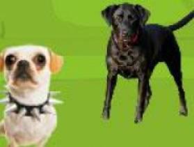 jeu chien adopter gratuit sur. Black Bedroom Furniture Sets. Home Design Ideas