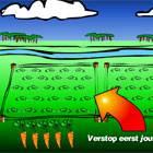 Plant your carrots